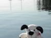 Cooper_Patos-Island-2