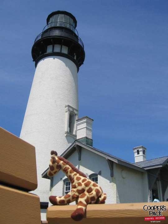 Giraffey_Newport-OR