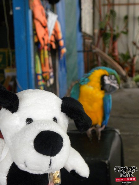 cooper-samui-thailand-parrot