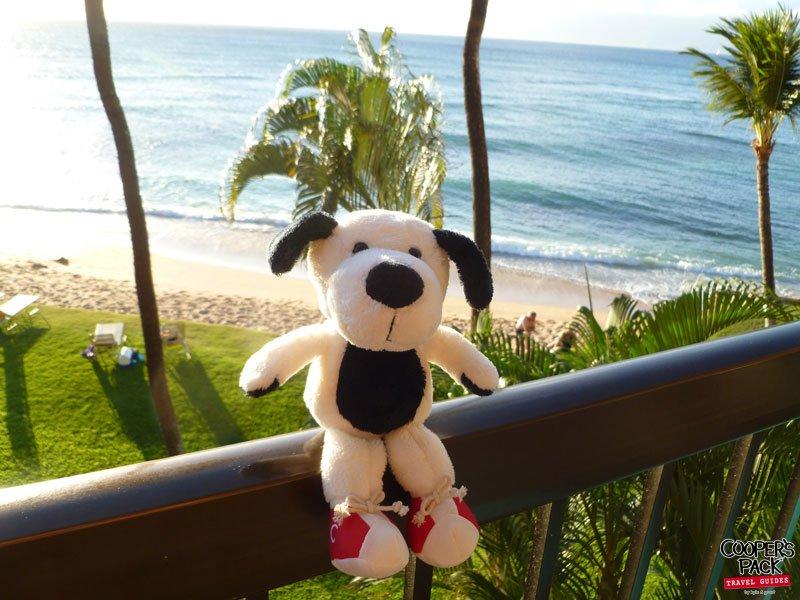 cooper-hawaii-view